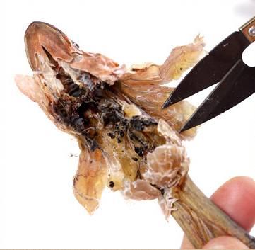 雪蛤是哪个部位,原来是它