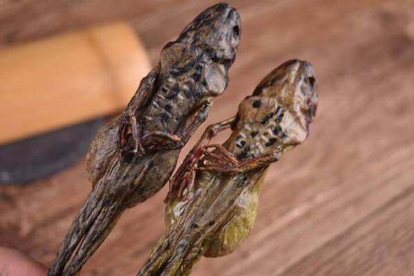 雪蛤干躯体的功效,雪蛤干躯体怎么吃