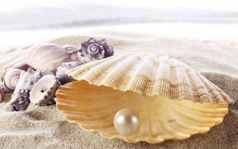 珍珠粉可以和燕窝一起炖吗