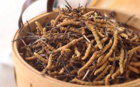 带你了解冬虫夏草的功效与作用